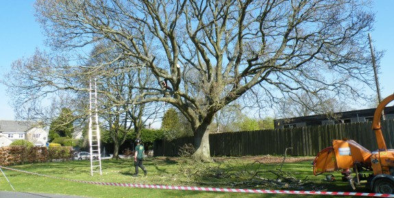 Commercial Tree Surgery Services