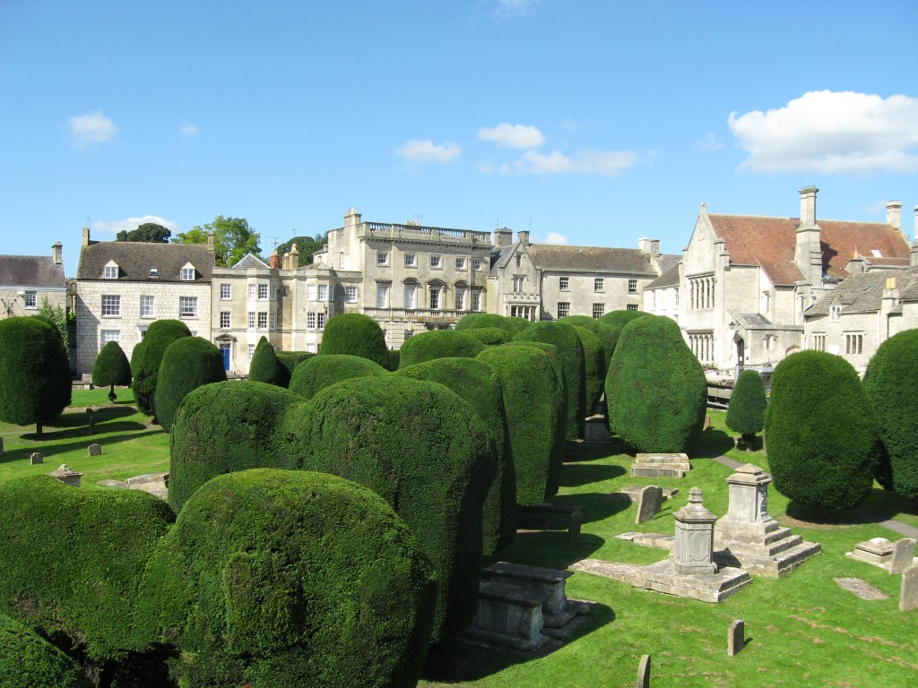 The Painswick Yews, maintained by Tree Maintenance Ltd for over 20 years