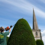Tree Maintenance Ltd. clipping the famous Painswick Yew Trees