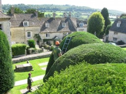 John and Bob trimming the Painswick Yew trees