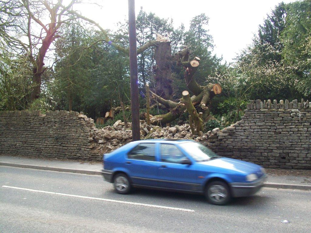 A fallen tree by a road