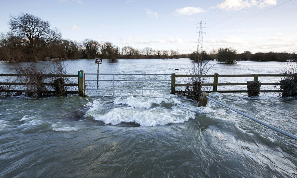 Floods can have a profound effect on trees. Photo Felix Clay.