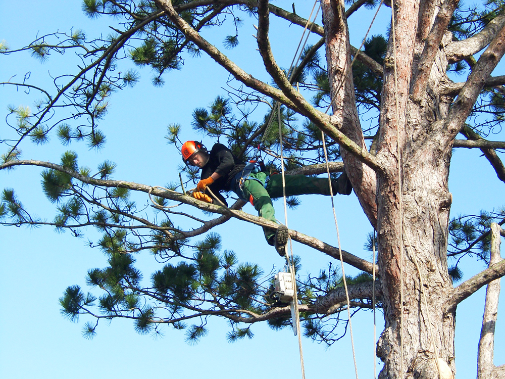A tree surgeon needs to have a wide array of training and experience