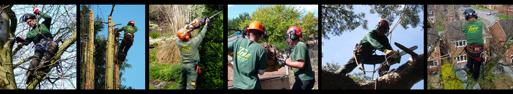 Tree Surgery - Tree Maintenance Ltd.