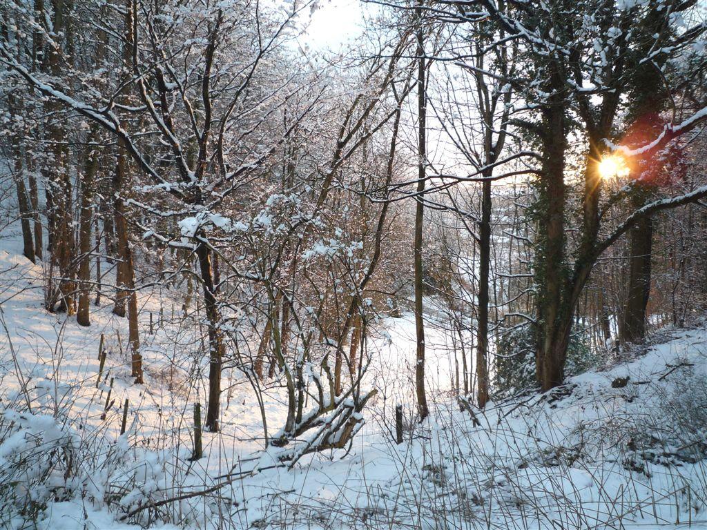 Bear Hill Woods