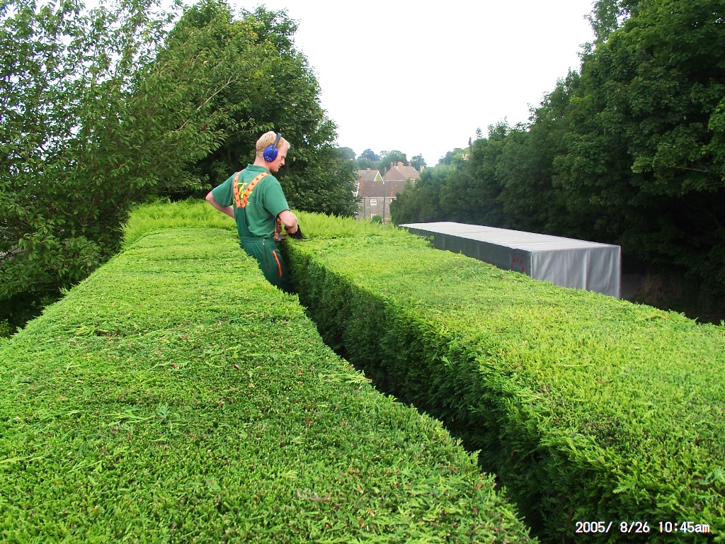 High hedge trimming