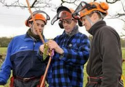 Certificates of Competence are required for much of the work done by tree surgeons